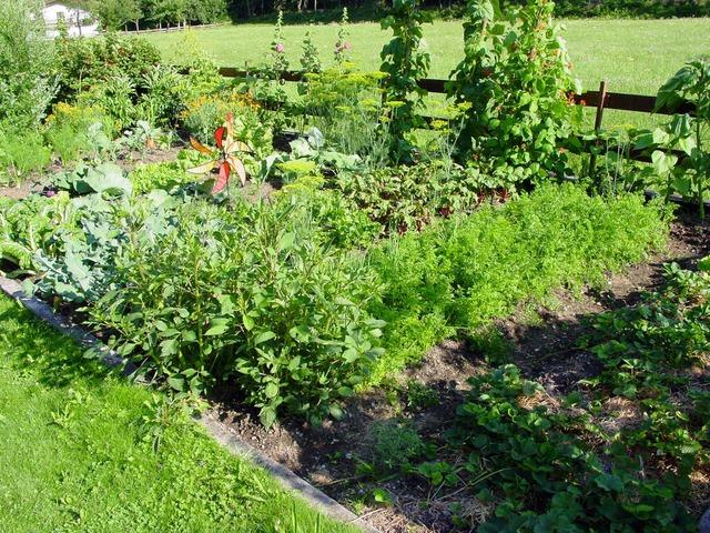 Vom Samen bis zur Ernte: Töpfe