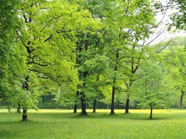 Umwelt(schutz)psychologie – Äh, wat für'n Ding?