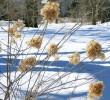 Grün im großen weißen Norden: Kalter Winter und warme Schokoladenerlebnisse