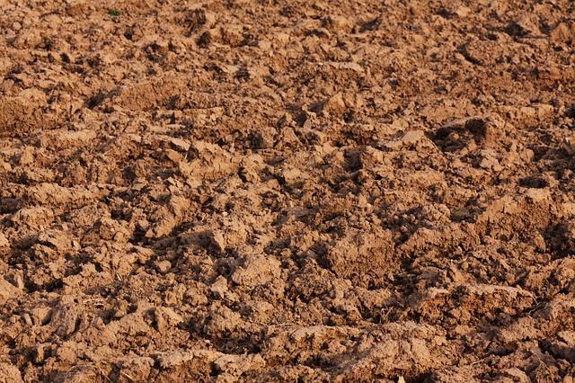 Vom Samen bis zur Ernte: Boden
