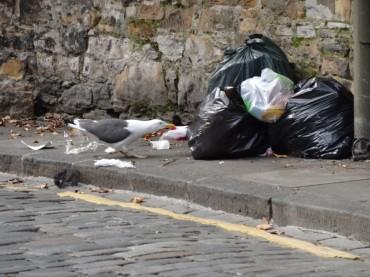 Mein (fast) plastikfreies Leben – Wieso, weshalb, warum
