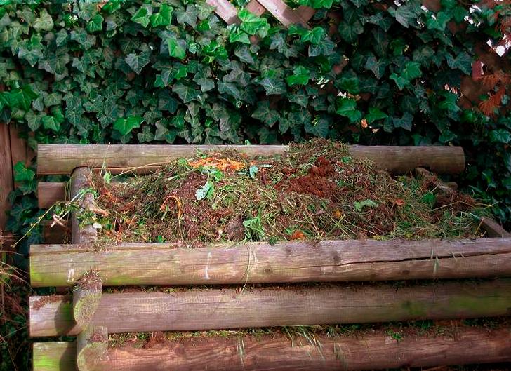 Vom Samen bis zur Ernte: Kompost liefert den besten Dünger