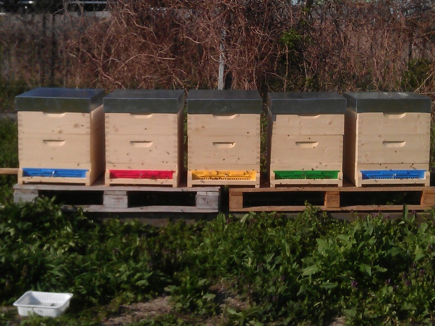 Vom Samen bis zur Ernte: Bienen