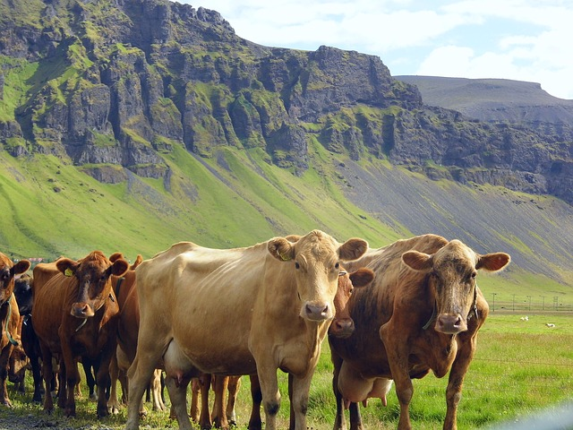 Warum nachhaltig leben nur vegan möglich ist, oder: Der grosse Umweltaspekt neben dem Tierschutz