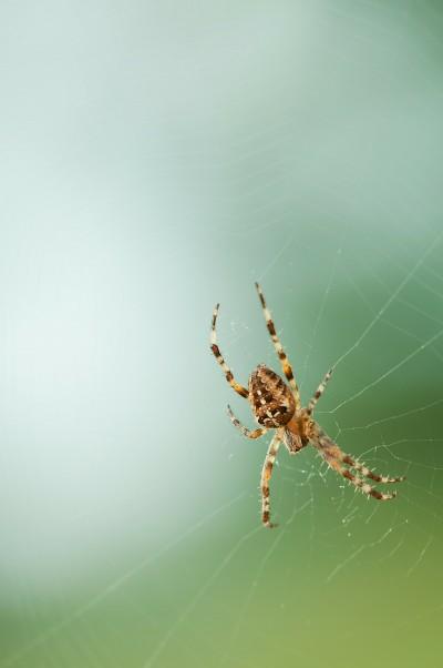 spider-208577_1280