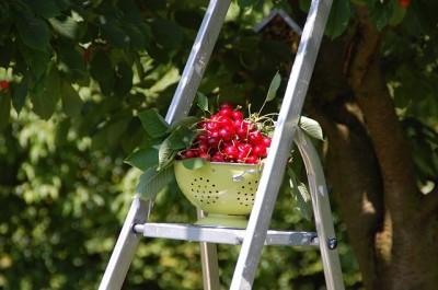 cherries-162896_640