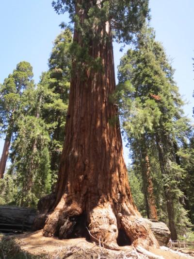 61 kings canyon redwoods (1)