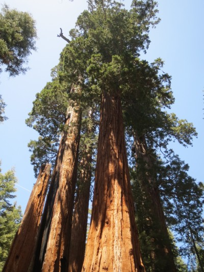 62 kings canyon redwoods (2)