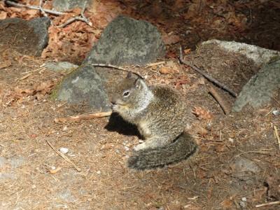 67 yosemite wildlife