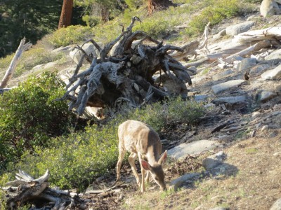 68 yosemite wildlife