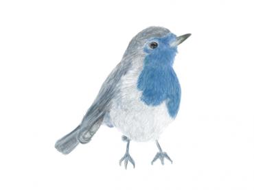 The bird's new banner: Neue Banner für das Nest