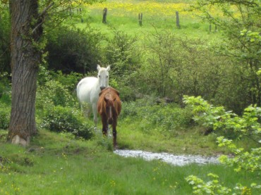 Wieder auf dem Jakobsweg: Tag 12, Le Puy en Velay
