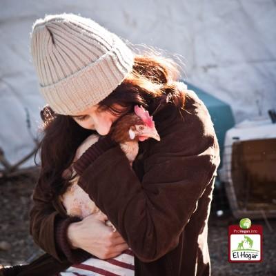 2012-01-04 -Gallinas con abrigos - JAL-3319