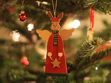 Lebender Weihnachtsbaum mit Liefer- und Abholservice