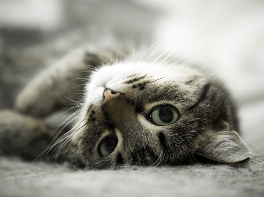 Neu! Getreidefreies Bio‐Katzenfutter von YARRAH