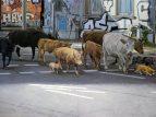 ANIMAL UTOPIA – Hoffnungsvoll nach vorne malen