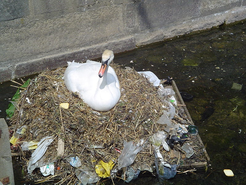 800px-Pollution_swan