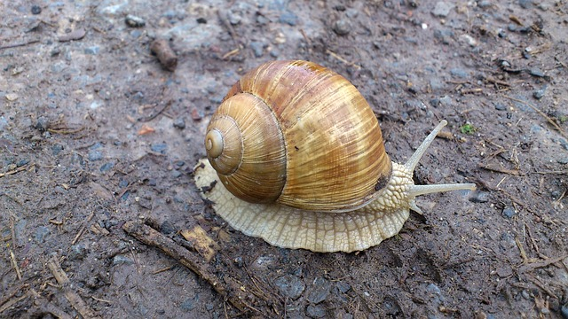 snail-142819_640
