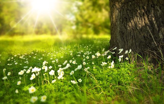 flowers-276014_640