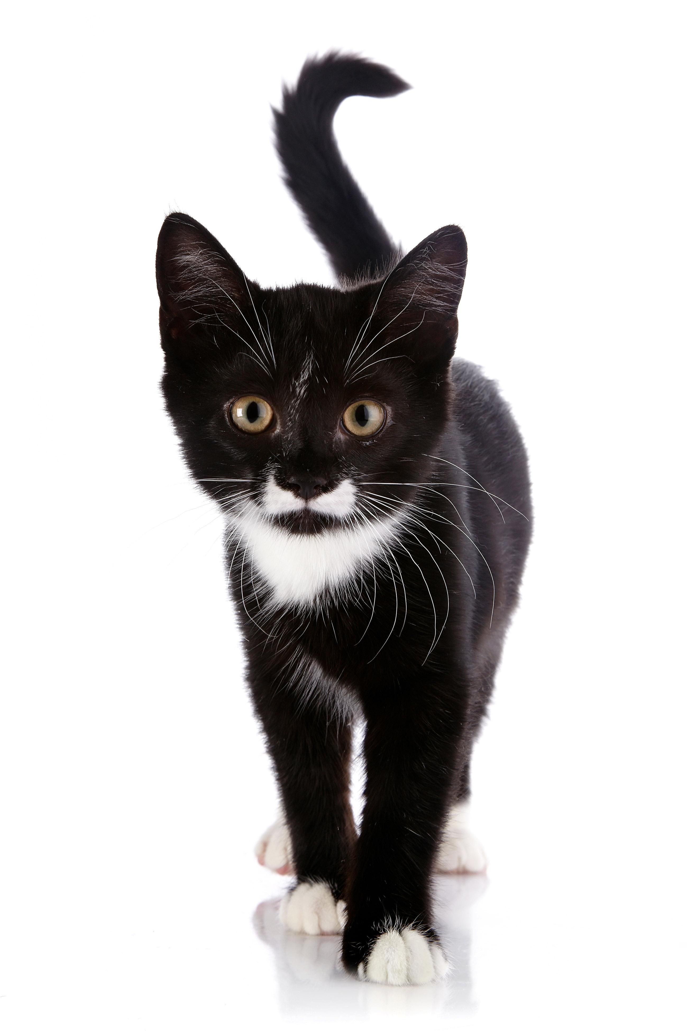 CAT_Black cat