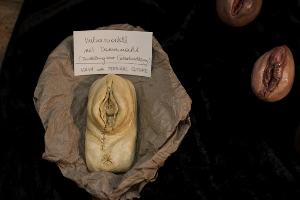 Vulvamodell
